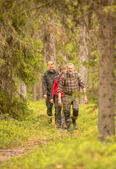 Explore the vast Taiga Forest of Lapland