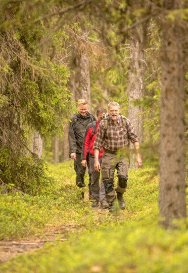 Utforska Lapplands djupa skogar