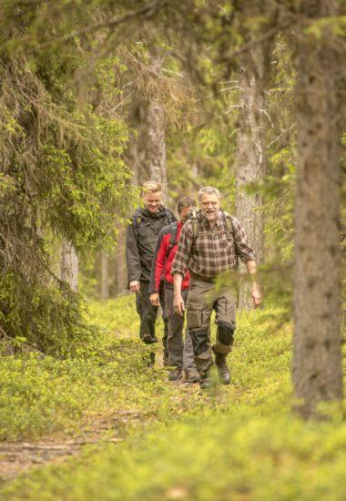 Vandra på skogstigar.