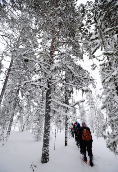 Learn about the nature of the vast Taiga Forest