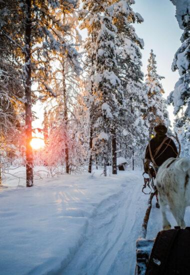 Maak kennis met de Bos-Saamis